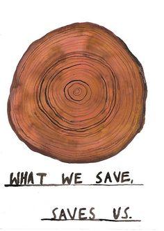 Bomen, vorm van leven, geven ons de kans om te leven, levenscirkels