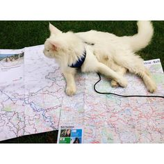 "586 Likes, 7 Comments - Cezar The Travelling Cat  (@cezars.crew) on Instagram: ""Looking back on when planing the bike route of the day, going from #recklinghausen #germany  -…"""