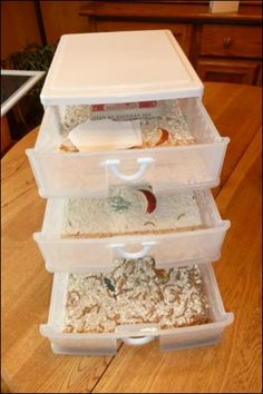 Raise your own mealworms to feed your chooks all throughout the year!