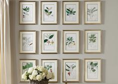 Botanical imagery has long held universal appeal for its simple, natural beauty. The renowned painter Alexandre Descubes created more than detailed botanical drawings. This lovely watercolor Framed Botanical Prints, Botanical Drawings, Botanical Gallery Wall, Galley Wall, Gallery Wall Frames, Room Pictures, Cool Walls, Diy Wall, Wall Art