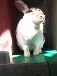 8.- una foto de su mascota