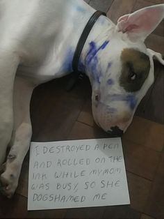 """I destroyed a pen and rolled on the ink while my mom was busy so she Dog Shamed me. Mini Bull Terriers, English Bull Terriers, I Love Dogs, Puppy Love, Cute Dogs, Funny Dogs, Funny Animals, Crazy Dog Lady, Dog Shaming"