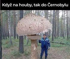 Wild Mushrooms, Stuffed Mushrooms, Mushroom Plant, Very Funny Memes, Wtf Funny, Mushroom Hunting, Anything Is Possible, Fruit Trees, Best Memes