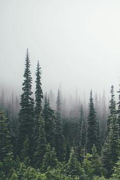 Imagen de fog and nature