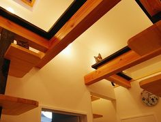 Creative Spaces Designed for your Cat architecture   Spaces Designed Creative