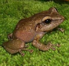 El Coqui is a symbol of Puerto Rico! Learn more about this beautiful country in this week's Exploring Geography post at mamasmiles.com! #homeschool #afterschool #worldculture