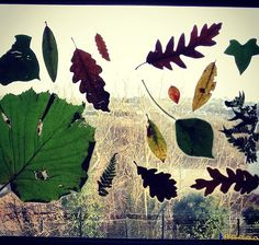 Laminated the leaves we collected on our woodlands trip today #outdoorlearning #LINE #leaves #nature #woodland #forest