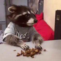 Cute trash panda