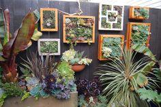 """Succulent """"pictures"""""""