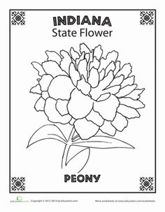 Florida State Flower School Projects Pinterest
