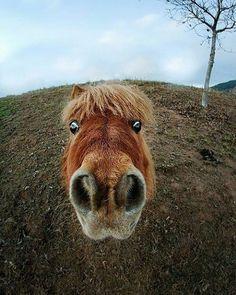 How cute   Nose