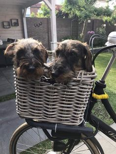Waiting for the ride to begin. Snug in our wicker bicycle basket of love.