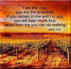 John 15:5  -  I am the vine; you are the branches. If you remain in me and I in you, you will bear much fruit; apart from me you can do nothing.