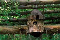 check out the frog in this birdhouse! lol