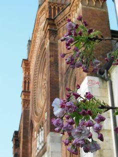 Primavera a Milano -San Marco - Foto Diana D visitearte