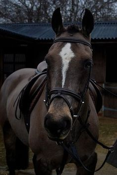 I want a horse like this!
