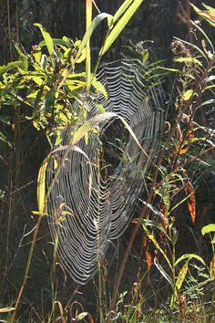 https://flic.kr/p/3rFo8J | autumn spider web