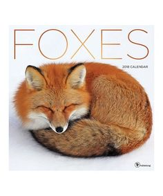 Look what I found on #zulily! Foxes 2018 Wall Calendar #zulilyfinds