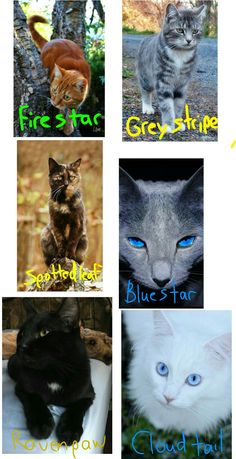 Lil thing I pieced together on how I picture some warrior cats! I had a random idea where you could say in the comments a warrior cat (any series I have read them all) and I would try and find a real cat for it. I own none of these original images, I merely put them together for fandom research. Edit By Splashfire Of LightClanClan
