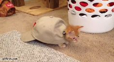 Cat In A Cap Chasing A Toy | 31 Cats You Won't Believe Actually Exist