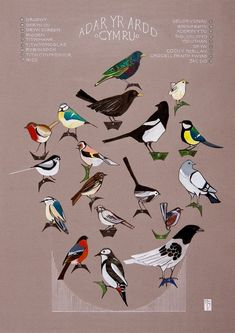 Rabbit Shed, Welsh Language, Fall Fruits, Wales Uk, Cymru, Ink Illustrations, Garden Birds, Prints, Artist