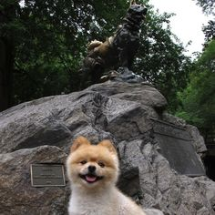 Monumentally Pomeranian