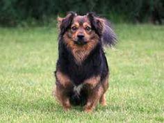 This dog is a scrub