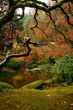 Japanese Maple at the Portland Japanese Garden Garden Garden backyard Garden design Garden ideas Garden plants Japanese Garden Plants, Portland Japanese Garden, Japan Garden, Japanese Gardens, Beautiful World, Beautiful Gardens, Beautiful Flowers, Wonderful Places, Beautiful Places