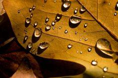 Raindrops on Leaf Photograph - Raindrops on Leaf Fine Art Print Rain Drops, Dew Drops, Water Drawing, Fine Art Prints, Framed Prints, Mixed Media Artwork, Art Sites, Pictures To Paint, Large Art