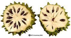 cherimoya - try exotics fruits