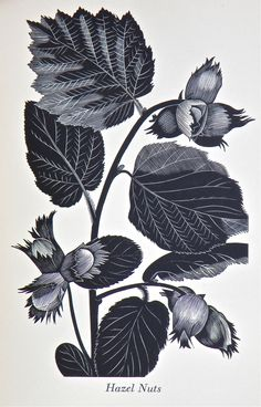 botanical | John Farleigh.