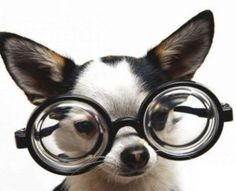 """Glasses? What Glasses? by Terry Matlen- """"I discovered long ago that if I'm holding something in my hands that is important to me and that will cause me panic and grief should I lose it, I become mindful of where I set it down. Let me share a tip that...I call  """"The ADD Mantra..."""""""