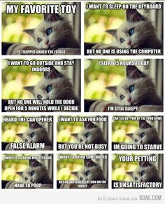 Cat problems of the world. This is funny, my cats honestly do so many of these. LOL.