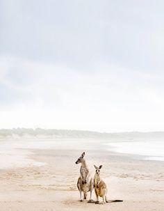 Nurture - 'Nurture' Photographic Print by Kara Rosenlund. A special moment of nurture, a mother Kangaroo w - Animals And Pets, Baby Animals, Cute Animals, Great Barrier Reef, Wildlife Photography, Animal Photography, Australian Photography, Beautiful Creatures, Animals Beautiful