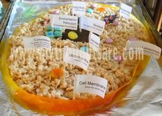 edible animal cell project ideas | It is happening on ctober 8, 2013 during Science class.