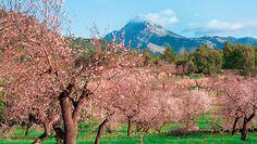 Mallorca - Genusswandern (Apr. - Okt.) - Sanftes Wandern für Aktive