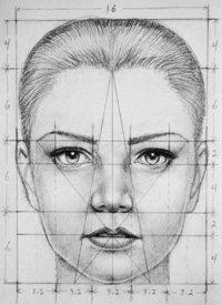 Le dessin n'a pas de règles chaque personne à un style différent c'est ce qui fait le charme de l'œuvre ! Mais après si tu veux vraiment avoir une proportion exacte du corps humain tu es sur la bonne image !