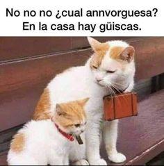 Funny Images, Funny Photos, Pinterest Memes, Image Memes, Spanish Memes, Jojo Bizarre, Animal Memes, Cat Life, Crazy Cats