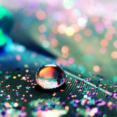 Neat macro!  Water droplet on a feather!