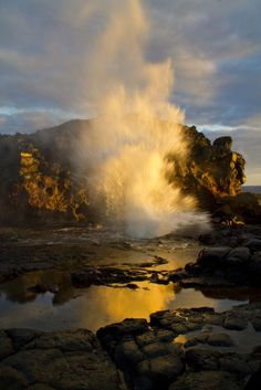blow hole - Google Search