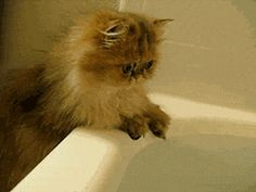 What kind of wizardry is this..... water? - Imgur