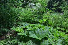 Woodland path in Kathleen's garden in A Garden For All by Kathy Diemer http://agardenforall.com