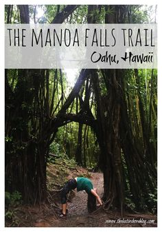 Rainy days are perfect because they make for epic waterfall hikes! Check out this guide to hiking to Manoa Falls on Oahu, Hawaii.