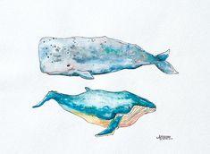 Whales by Alexandra Newton