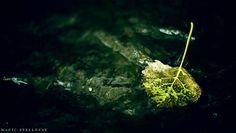 "magic-spelldust: "" Leaf in a Stream"