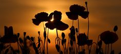 22 Anzac Day Activities and Teaching Resources