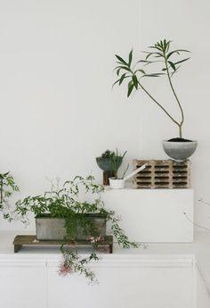 Originally for the Japanese aesthetic wabi-sabi. Explore tags: what is wabi-sabi? Interior Plants, Interior Exterior, Modern Interior, Asian Interior, Interior Garden, Interior Design, Wabi Sabi, Ikebana, Indoor Garden