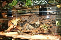 Reptile House, Reptile Habitat, Reptile Room, Reptile Cage, Leopard Gecko Terrarium, Reptile Terrarium, Bearded Dragon Tank Setup, Pet Plan, Reptile Decor
