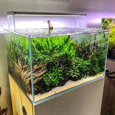 Planted Aquarium, Aquarium Garden, Aquarium Fish, Aquarium Ideas, Fish Tank Stand, Indoor Water Garden, Aquascaping, Plantar, Freshwater Aquarium