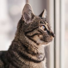 A reader relocating to a smaller home asks Dr Platzhund how she can help her cats avoid stress and adjust to a new home Buy A Kitten, Tiny Kitten, Buy A Cat, Pedigree Cats, Getting A Kitten, Types Of Cats, Fancy Cats, Kitten Rescue, Owning A Cat